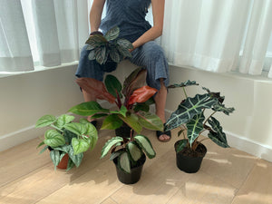 person holding houseplant