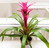 bromeliad outside in
