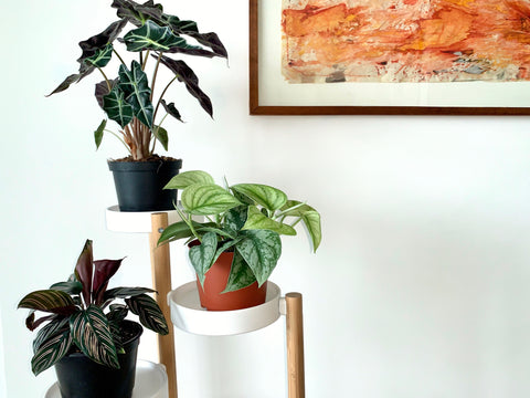 live houseplants at home