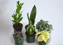Load image into Gallery viewer, houseplant starter kit