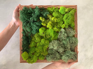DIY Moss Wall Art Kit - Outside In
