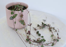 Load image into Gallery viewer, string of hearts pink pot