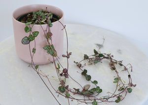 string of hearts pink pot