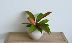 Clay Pot Orange Plant