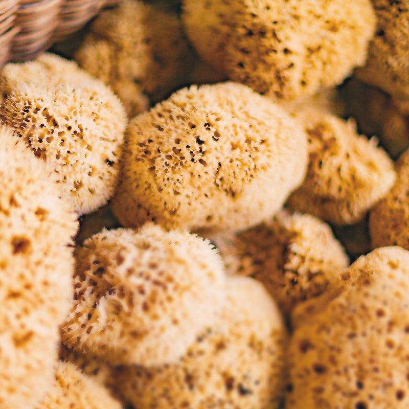 Croll & Denecke Natural Honeycomb Sea Sponge