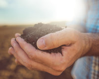 A Crash Course on Biofertilizers