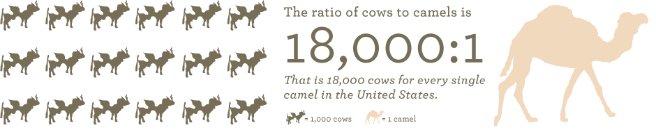 Population of camels in the US - ratio of cows to camels in the US
