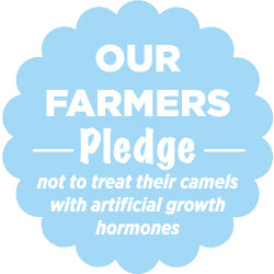 Farmers pledge - not to treat camels with artificial growth hormones