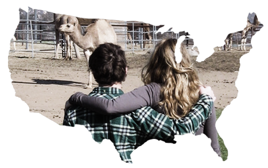 Camel milk in the USA