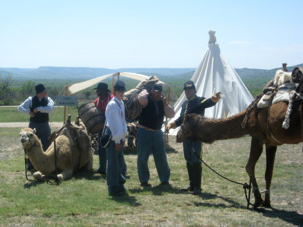History of Camels in the US