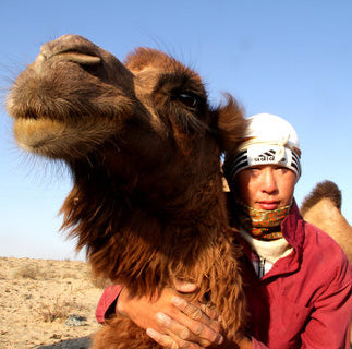 Nomad and his camel