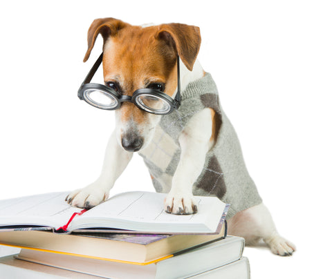 dog in glasses reading a book