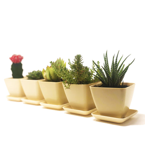 Image of Sprig & Sprout Mini Eco Friendly Bamboo Plant Pots With Drip Trays