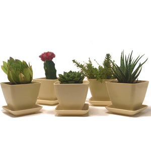 Sprig & Sprout Mini Eco Friendly Bamboo Plant Pots With Drip Trays