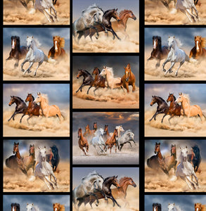 Brumbies Collage