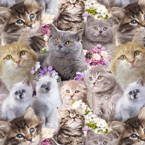 Cute Kittens Allover