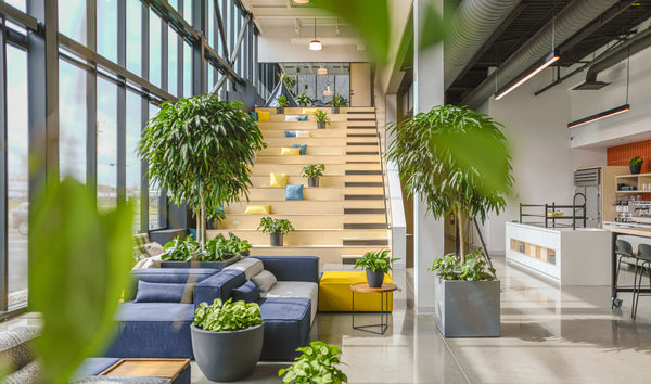 Coco Village offices - Living space