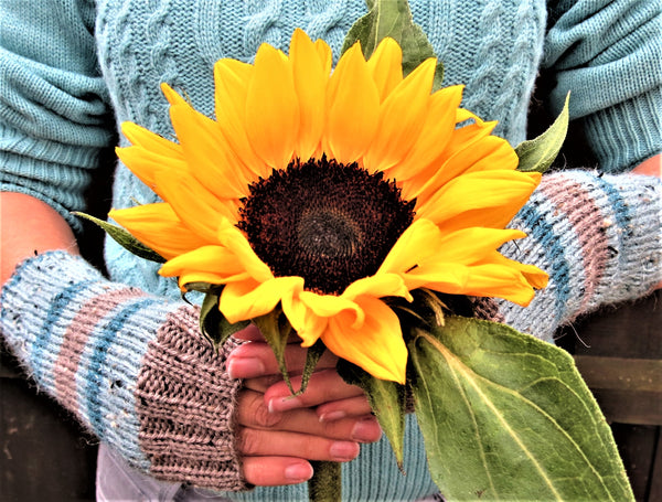 Wrist warmers worn by model holding sunflower