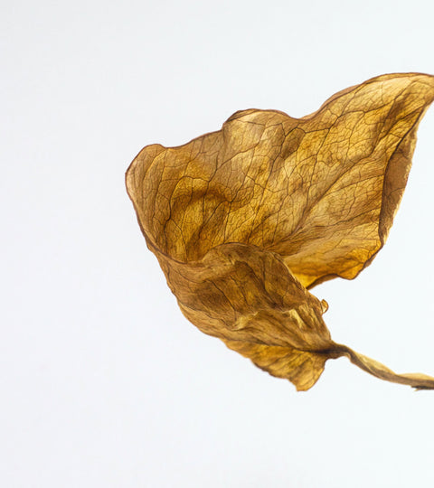 Color Preserve
