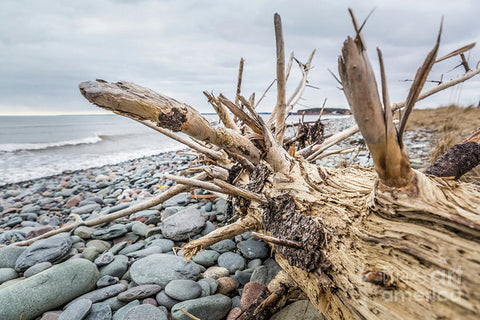Driftwood on the shore