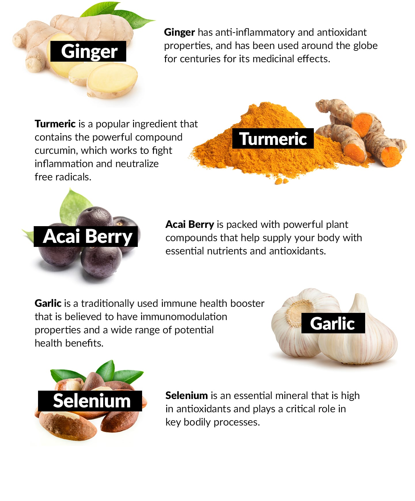 Ginger has anti-inflammatory and antioxidant properties, and has been used around the globe for centuries for its medicinal effects. Turmeric is a popular ingredient that contains the powerful compound curcumin, which works to fight inflammation and neutralize free radicals. Acai Berry is packed with powerful plant compounds that help supply your body with essential nutrients and antioxidants. Garlic is a traditionally used immune health booster that is believed to have immunomodulation properties and a wide range of potential health benefits. Selenium is an essential mineral that is high in antioxidants and plays a critical role in key bodily processes.