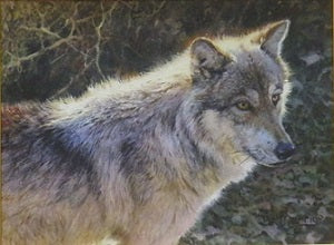 Hayden Valley Wolf OIl by Bonnie Marris