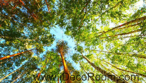 Image of Tall Tree Forest Blue Sky 00077 Ceiling Wall Mural Wall paper Decal Wall Art Print Decor Kids wallpaper