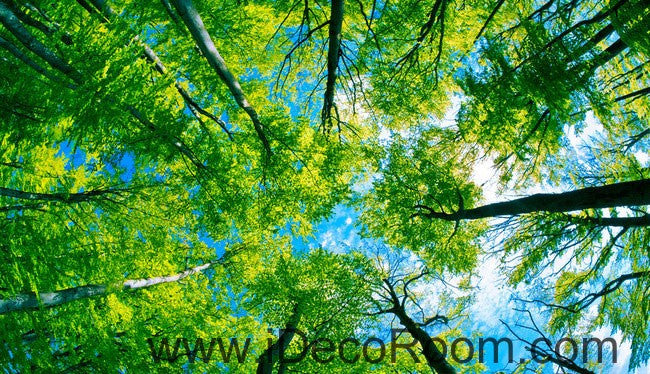 Tree Sky Sun Beam Forest 00087 Ceiling Wall Mural Wall