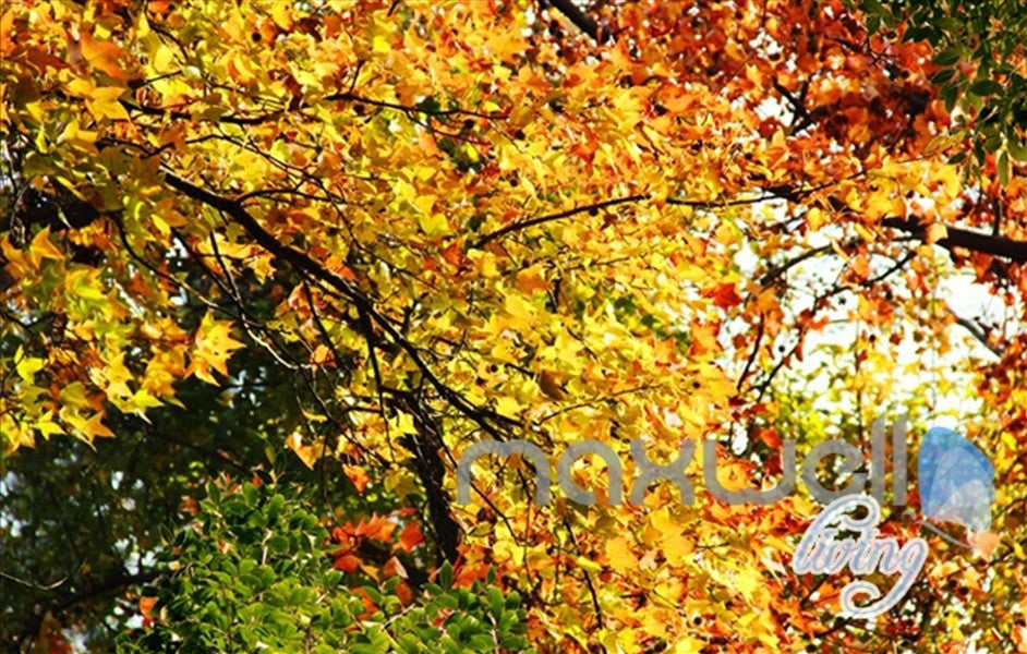 3D Autumn Forest Park Entire Living Room Wallpaper Wall