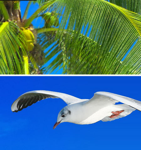 Image of 3D Palm Tree Beach View Seagull Ceiling Entire Living Room Wallpaper Wall Mural Art Decor IDCQW-000207