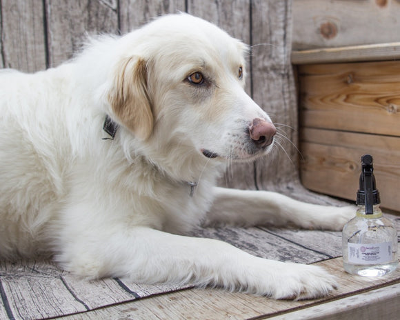 Buzz Off  Bug Repellent for Dogs