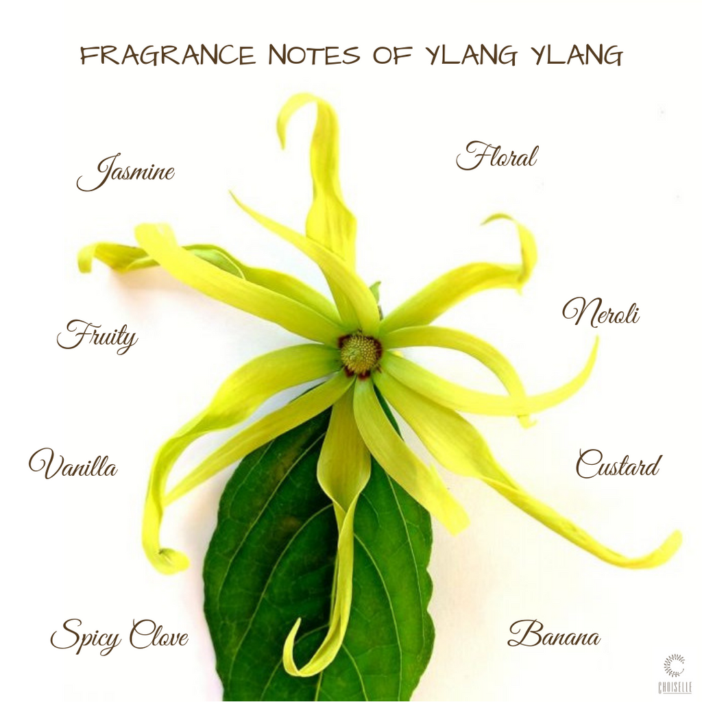The Alluring Ylang Ylang!