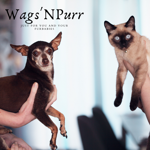 Pet store - Wags N Purr