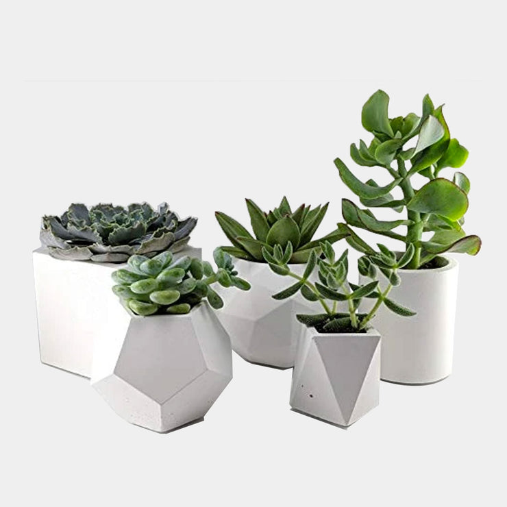Succulent planter set of 5 made of concrete for Indoor Plants