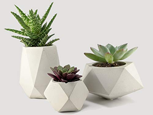 Geometric succulent planter set of 3 made of concrete for houseplants