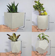 Concrete Planter Group of 4
