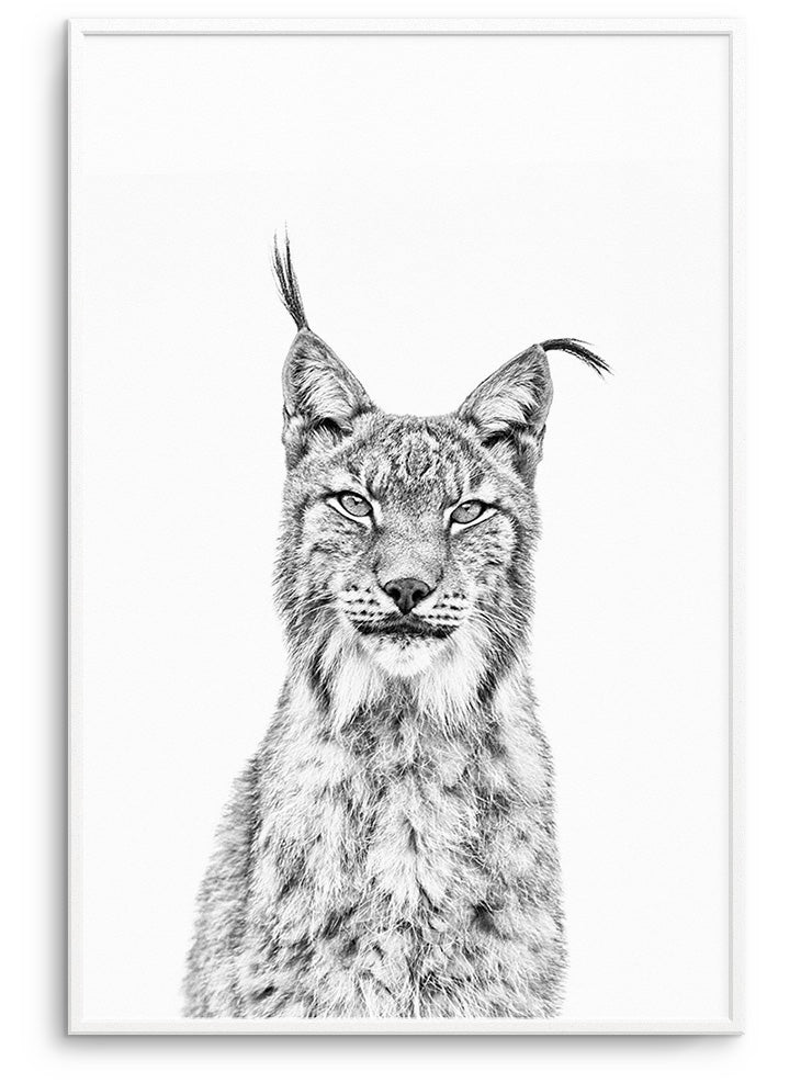 BEAUTIFUL LYNX - FINE ART POSTER