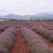 Load image into Gallery viewer, Fields of Tasmania bath salt