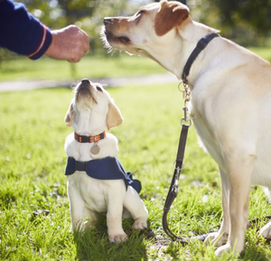 9 Simple but Effective Dog Training Tips