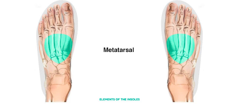 Metatersal