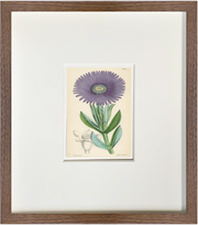 Fine Art Print: Purple Daisy