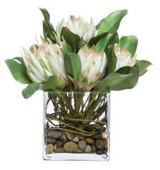 Flowers: Protea in 6-in. Glass Cube Waterlike