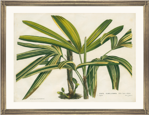 framed fine art print of vintage botanical