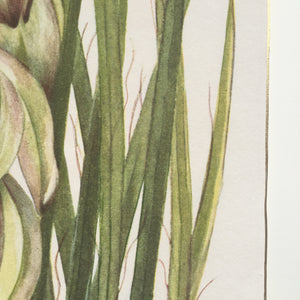 detail of fine art print of yucca plant with gold edge