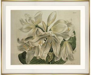 framed fine art print of coastal lily