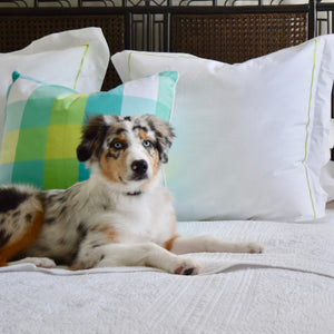 puppy dog on bed with throw pillow in palm beach plaid pattern with bed linens