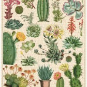 PUZZLE 1000PC VINTAGE CACTI & SUCCULENTS CAVALLINI & CO