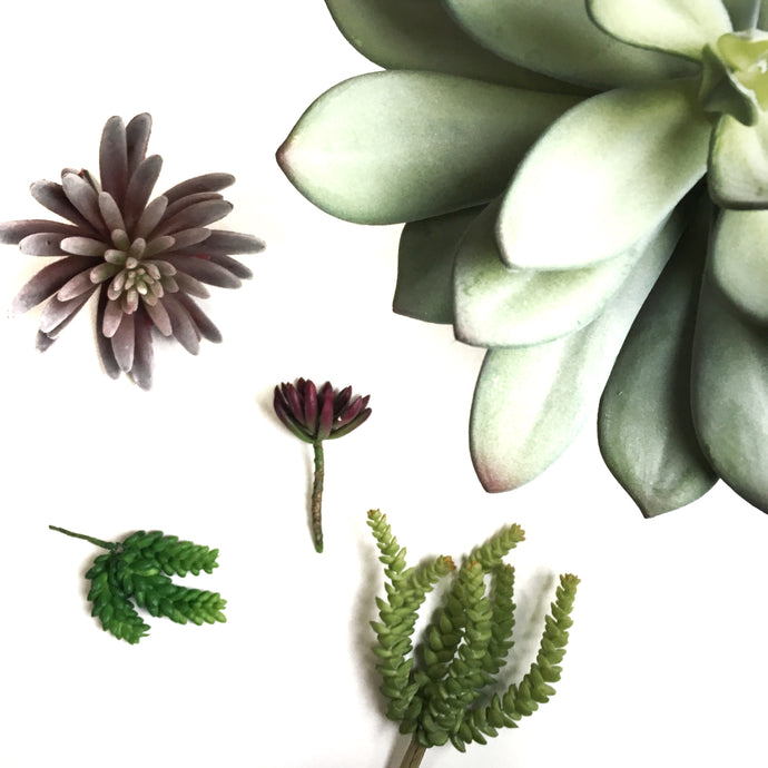Succulents: Real vs. Fake