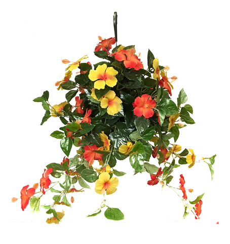 Hanging Baskets: 2019 Collection