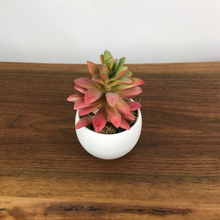 Load image into Gallery viewer, Campfire Crassula Succulent w/Luna Pot